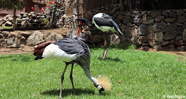 Eksotiske fugle